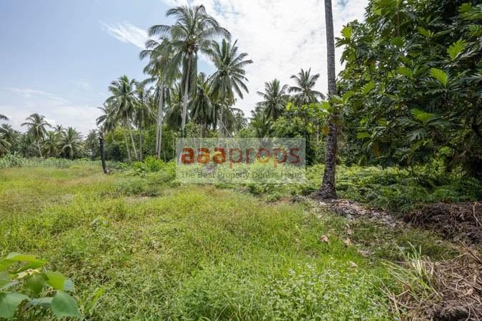 Tanah Pertanian @ Revolusi Hijau Kampung Perepat, Kapar